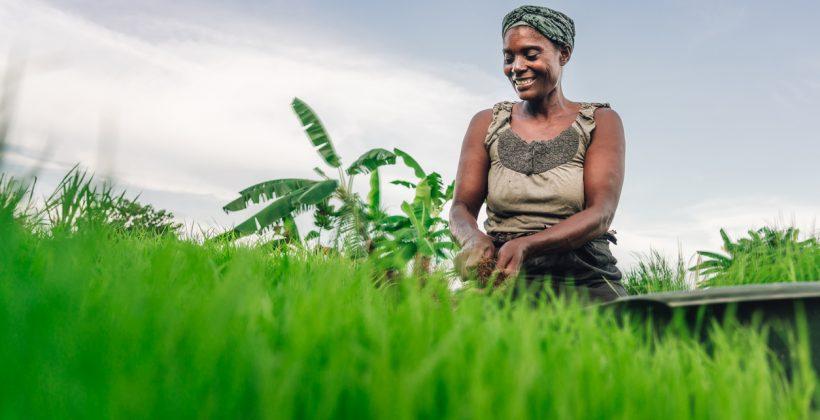 female farmer in the field in Malawi