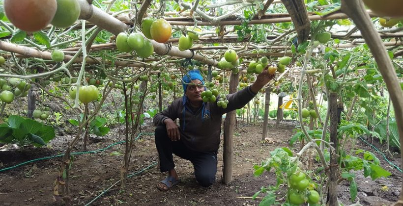 man looking at fruit in a vineyard