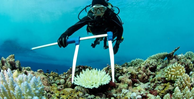 scientist measuring bleached coral